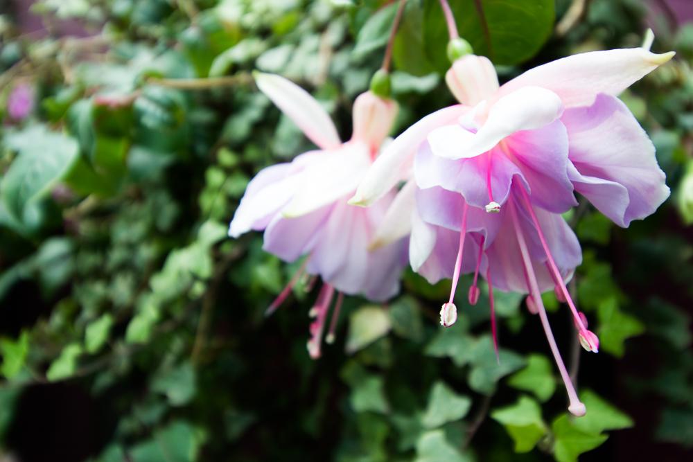 gardensbythebay-4