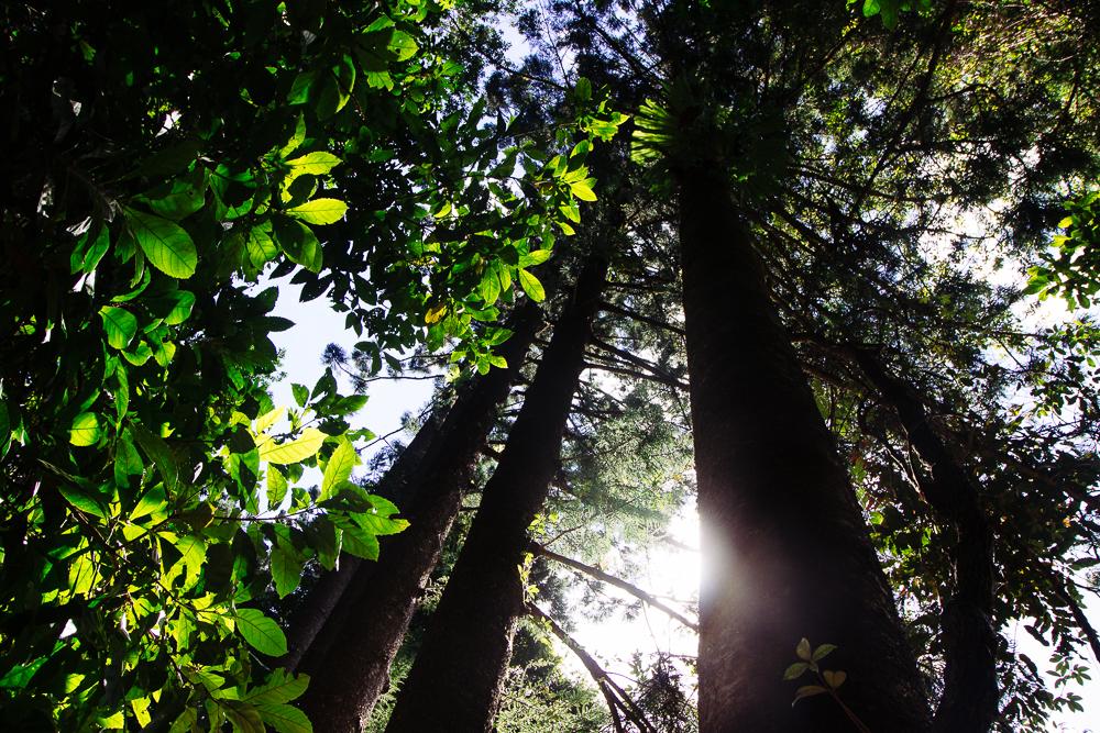rainforests-10