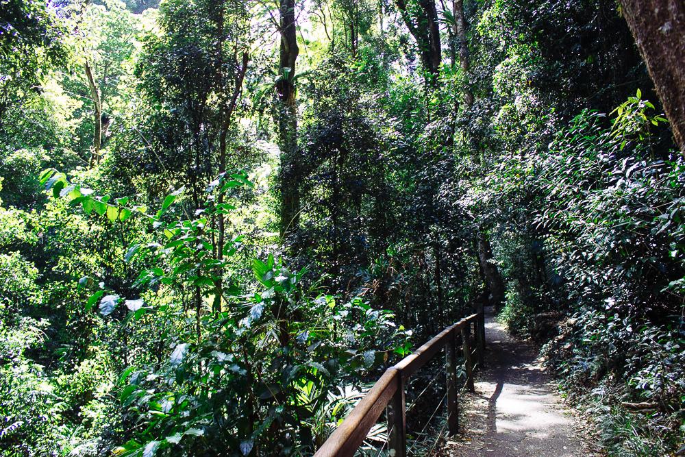 rainforests-6