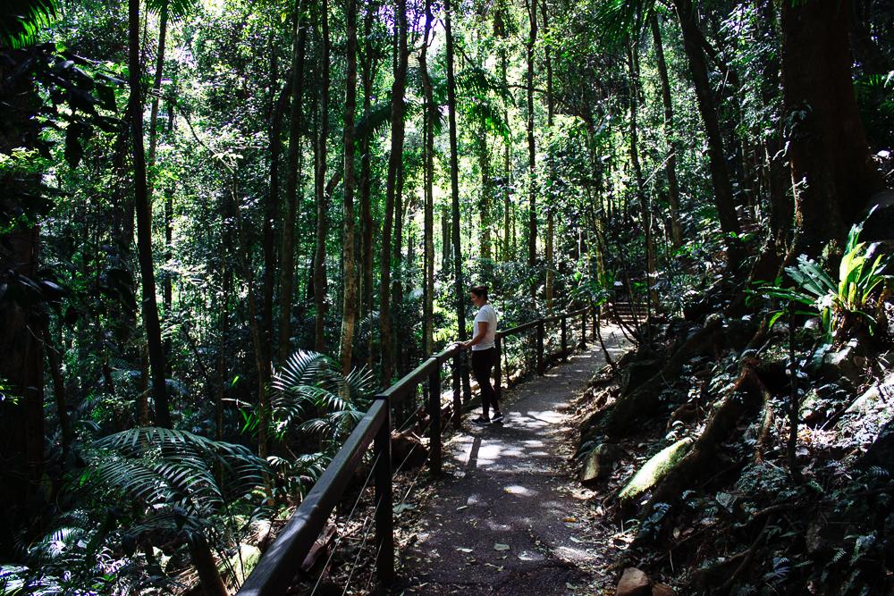 rainforests-7