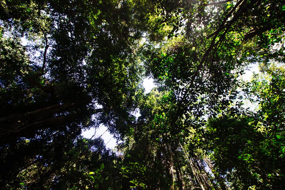 rainforests-8