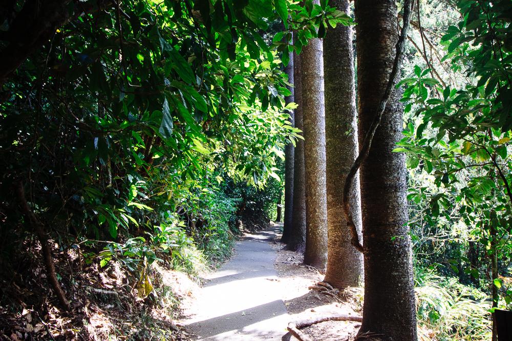rainforests-9