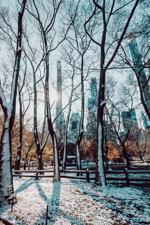 newyork-52